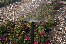 watering flowers plantation