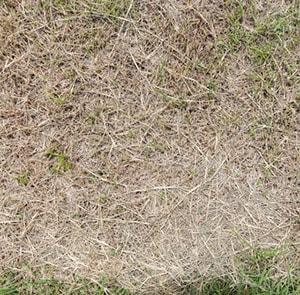probleme-avec-pelouse