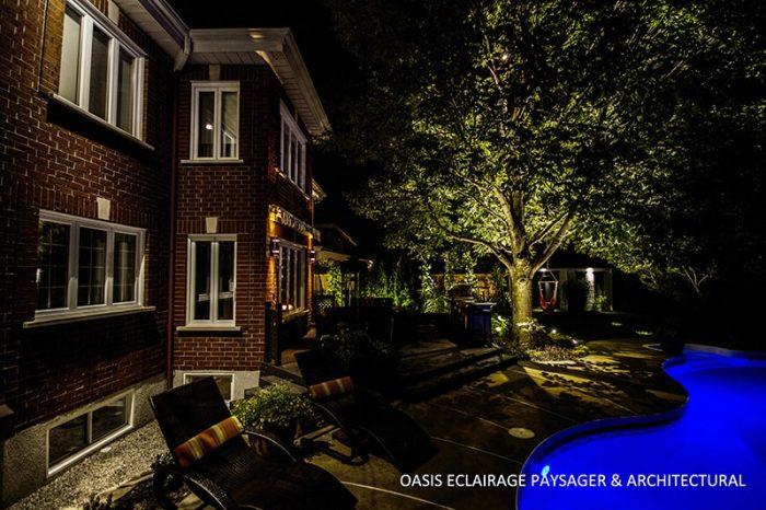 arbre extérieur en valeur avec éclairage