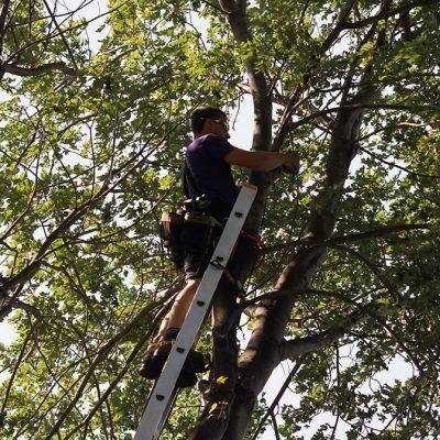maintenance-eclairage paysager