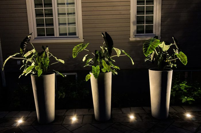 eclairage-architectural-plantes